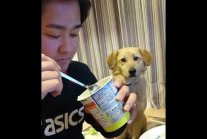 Dog looks away when owner eats.