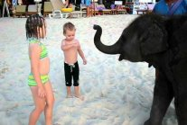 Our kids play with a baby elephant on the beach, Phuket Thailand