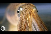 You're Not Hallucinating. That's Just Squid Skin.
