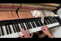 Cat Lies Down on Piano Keys While Human Plays a Tune