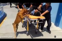 Dogs Refuse to Leave Owner's Side in Emergency Room