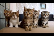 The best Funny Playing Cats and Dancing Kittens