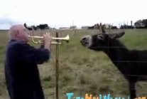 Russian Duet With Donkey