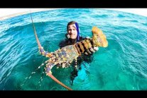 GIANT CRAYFISH MUD CRAB AND CORAL TROUT
