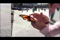 Freeing butterfly :)