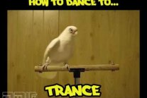 How to dance to... House, Dubstep, Drum'n'bass, Trance, Industrial, Trap
