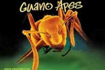 Guano Apes Open Your Mind