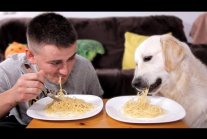 Spaghetti Eating Competition: My Golden Retriever Dog vs. Me
