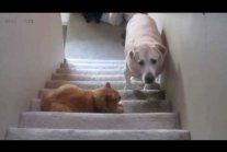 DOGS AFRAID OF CATS (HD)
