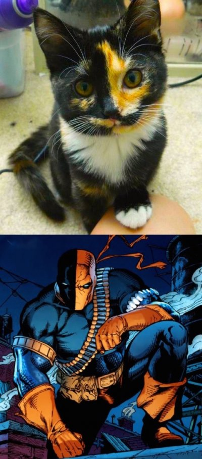 1703 Best Warrior cats images in 2020 | Warrior cats, Cats
