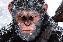 Coronavirus: Monkeys 'escape with COVID-19 samples' after attacking lab...