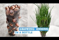 You Have Never Grown Green Onions This Way in Winter