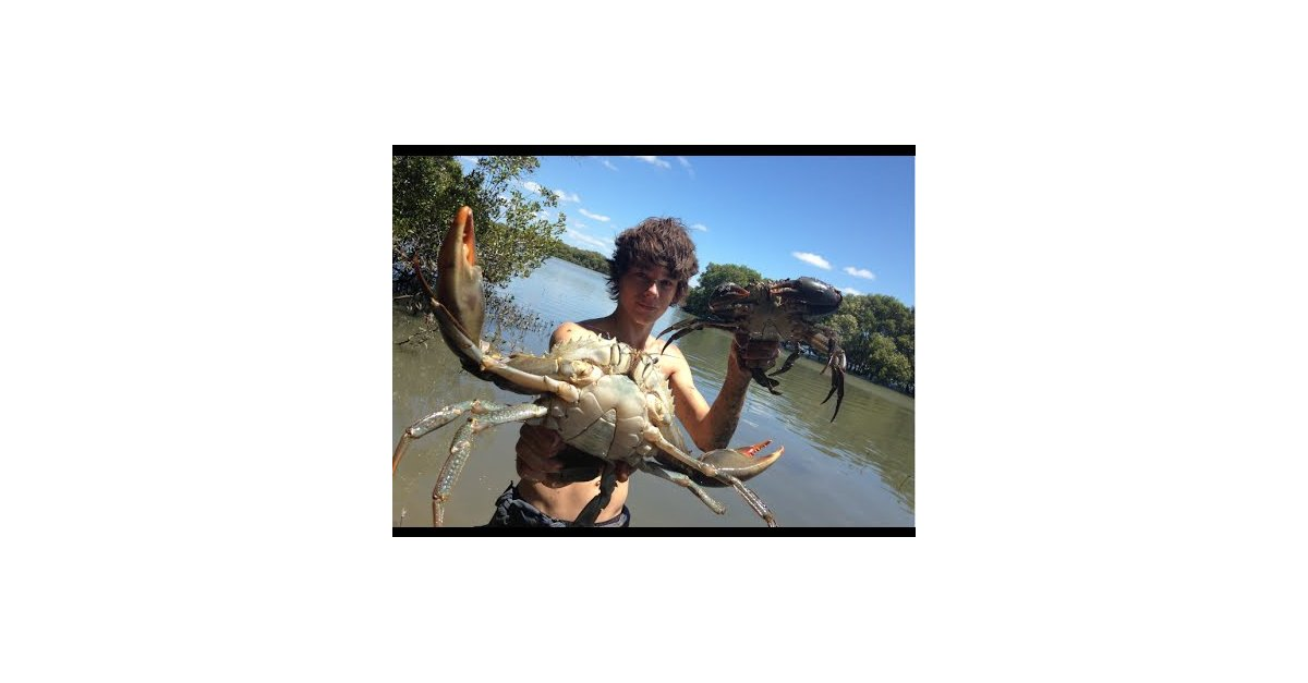 Pictures Of Swamp Dog Crabs