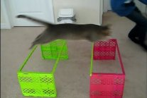 THE BEST OF CAT AGILITY
