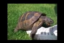 Turtle Remix