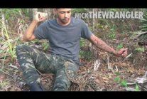 Proof Rattlesnakes Don't Want To Bite Unless Provoked | Nick...